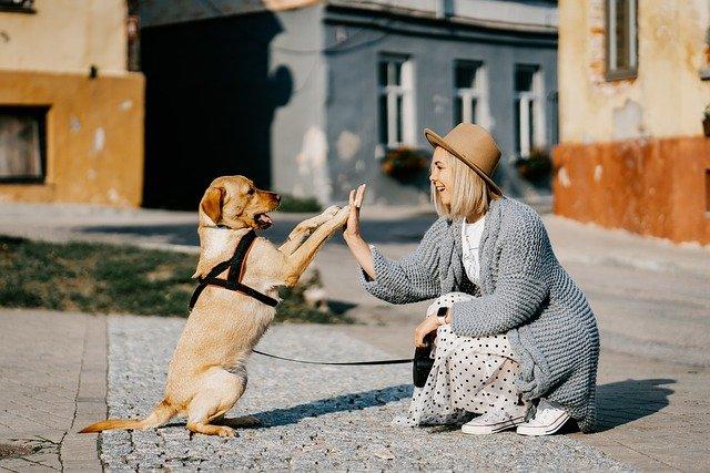 Mês dos animais: o amor do pet pelo seu tutor é incondicional