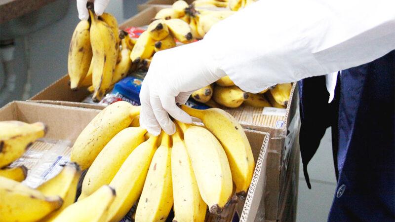 Preço de banana sobe 29% em Ponta Grossa e cesta básica passa a custar R$639