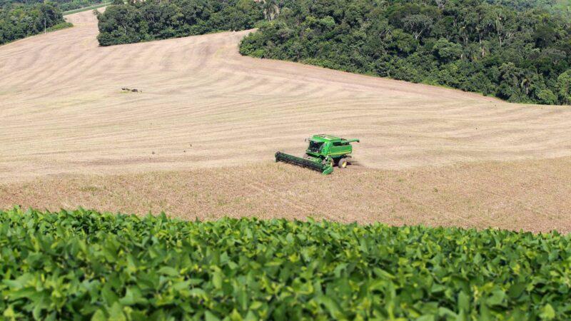 Boletim agropecuário trata da aceleração no plantio de feijão