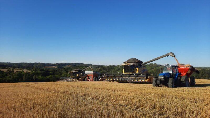 Safra de Inverno da Castrolanda tem crescimento na área produtiva e colheita com qualidade superior ao último ano