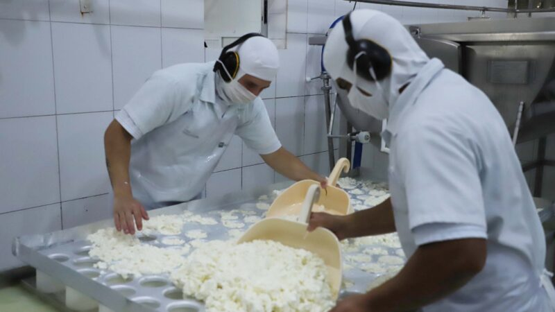 Indústrias de laticínios ampliam a importância da cadeia do leite no Paraná