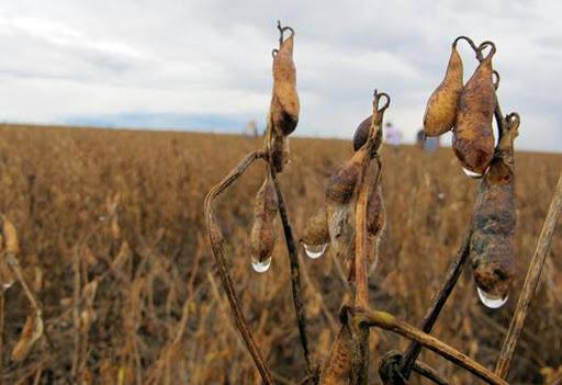 Chuvas são favoráveis na reta final da safra de soja