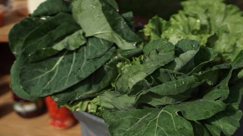Pesquisa aponta impacto de compra da agricultura familiar durante a pandemia