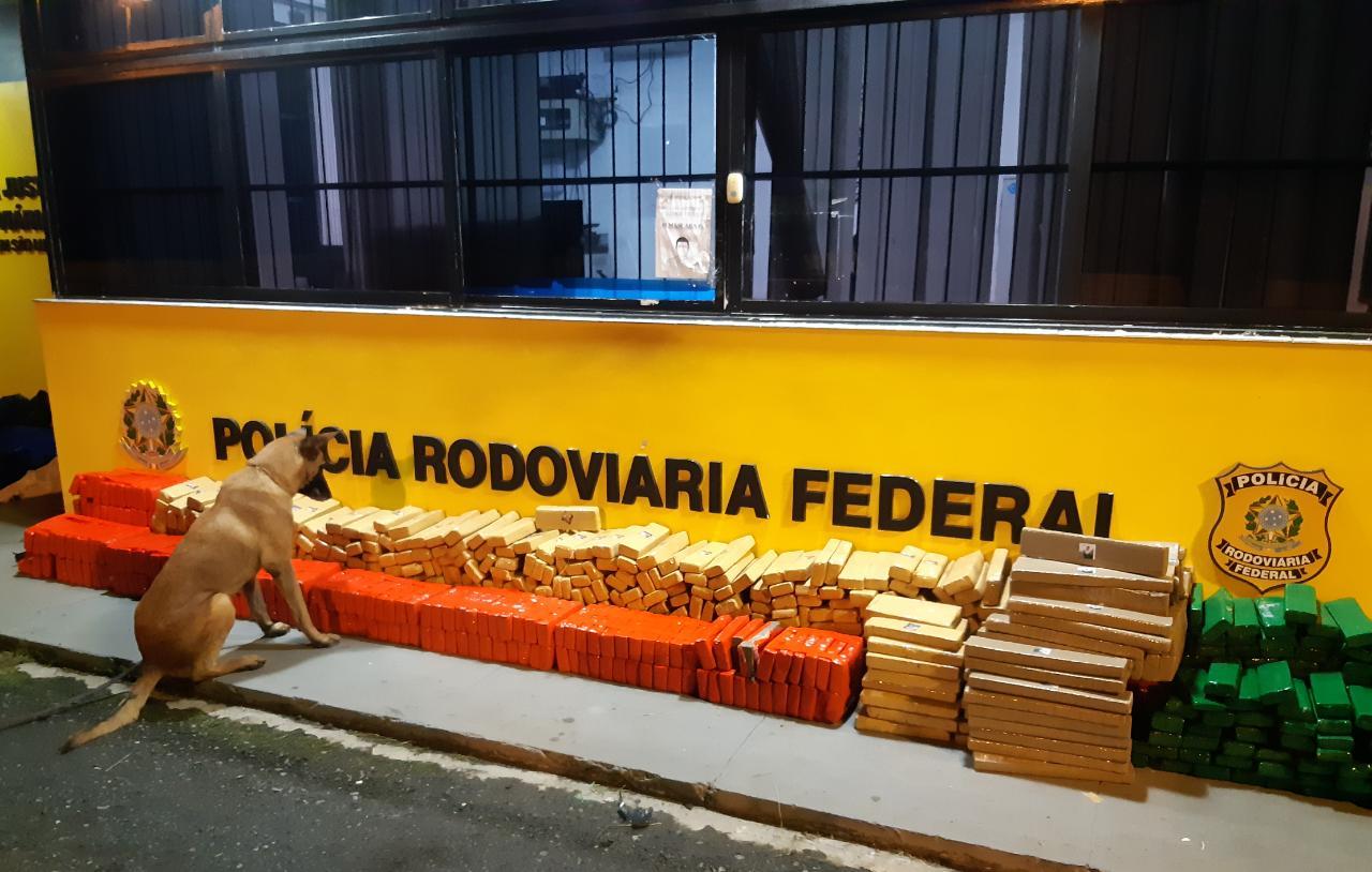 PRF apreende mais de meia tonelada de maconha em Porto Amazonas