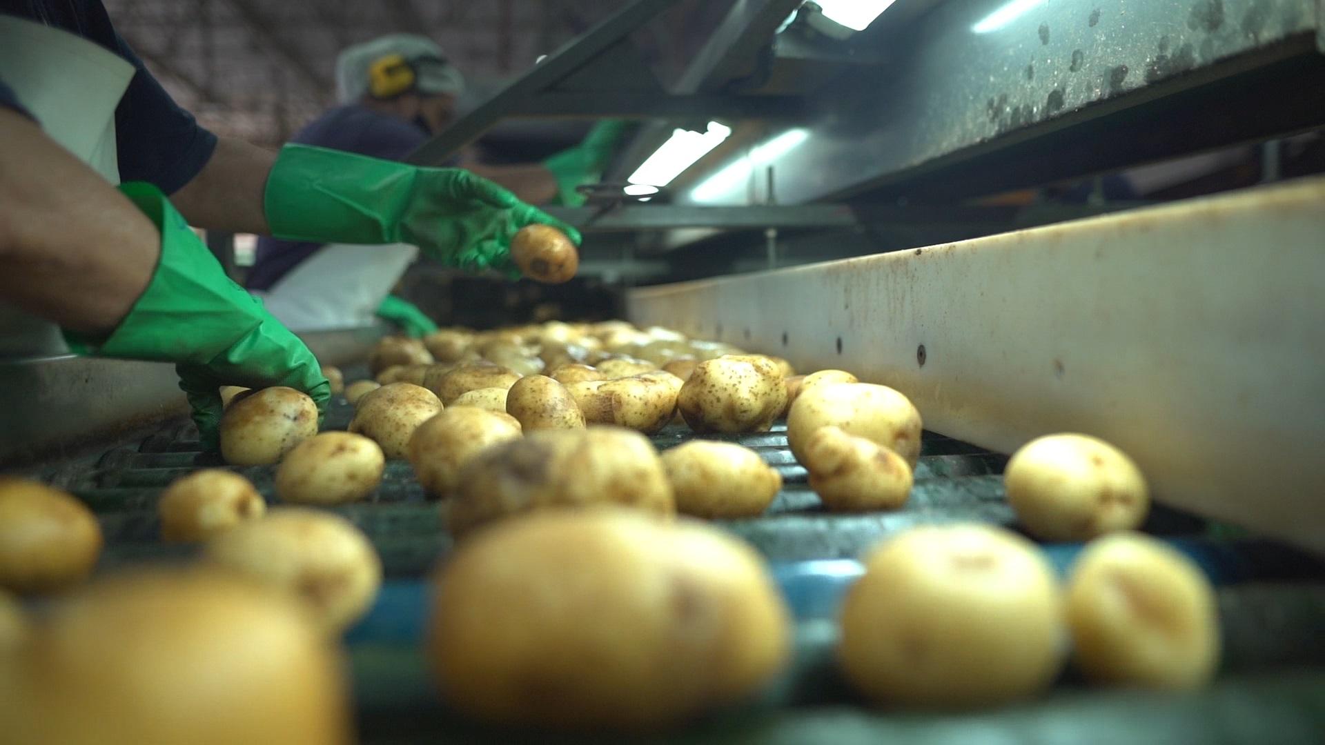 Lavador de Batatas da Castrolanda é o primeiro do país a ter ISO 9001: 2015