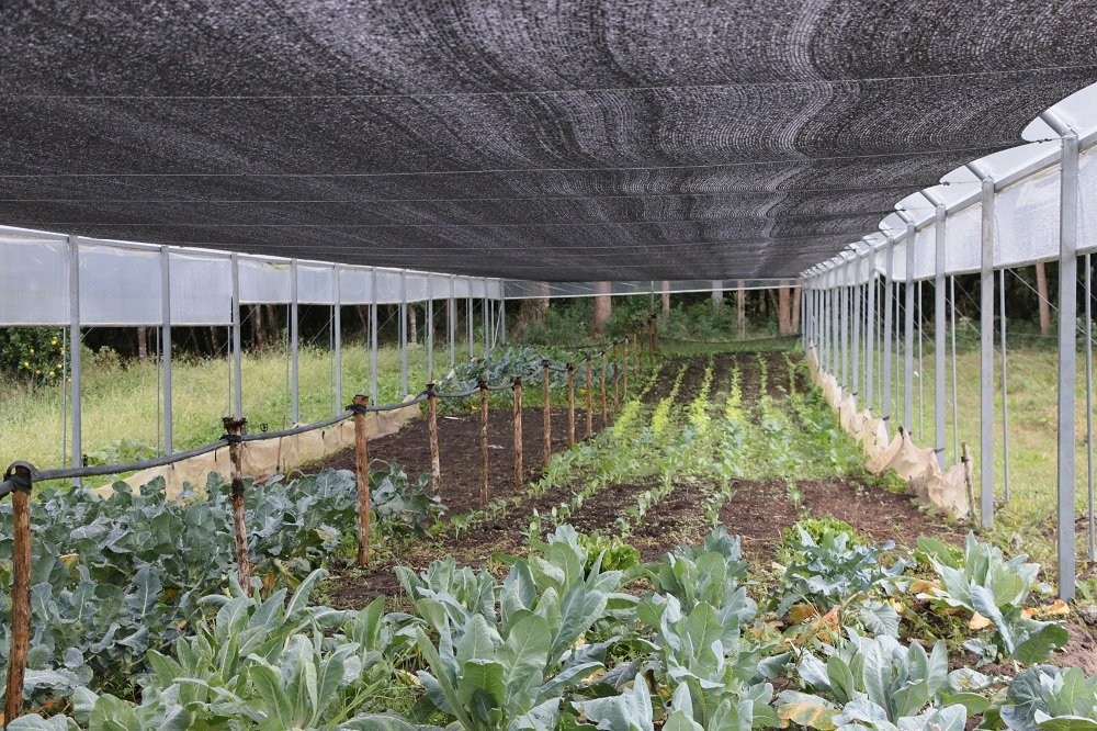 Cultivo em estufa beneficia pequenos produtores de Castro