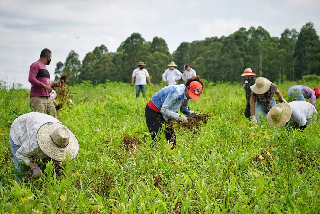 Fazenda Capão do Cipó e famílias do MST são alvo de nova audiência pública