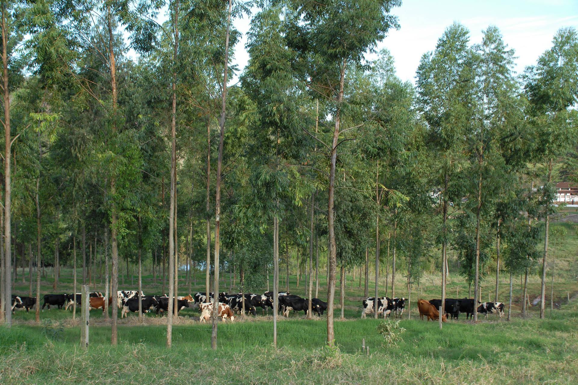 Estudo com participação paranaense aponta crescimento da agricultura sustentável