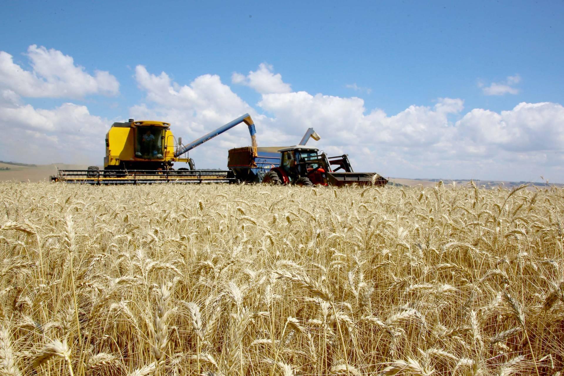 Ritmo do plantio de trigo ainda é lento, mas a expectativa é de produtividade recorde