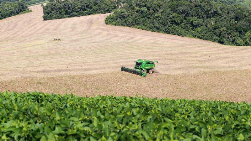 Boletim Agropecuário destaca início da colheita do feijão no Paraná