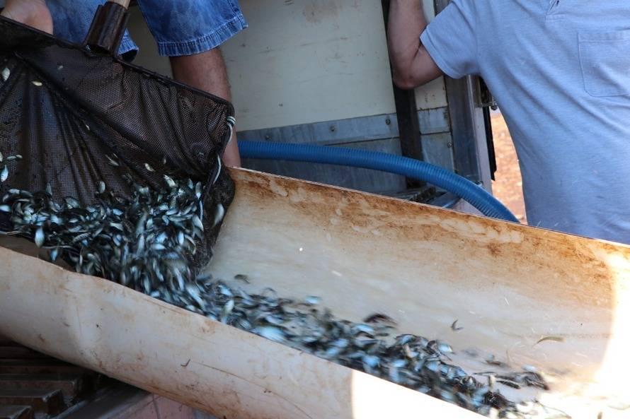Paraná tem novas normas para repovoamento de peixes