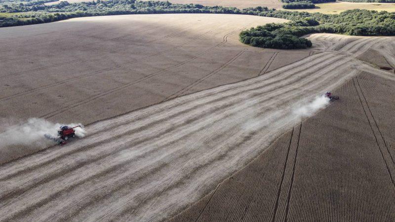 Paraná exporta menos soja no 1º quadrimestre, mas produtor tem remuneração maior