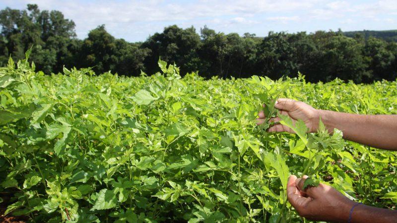 Sistema de Agricultura discute plano de combate integrado para proteção da sericicultura