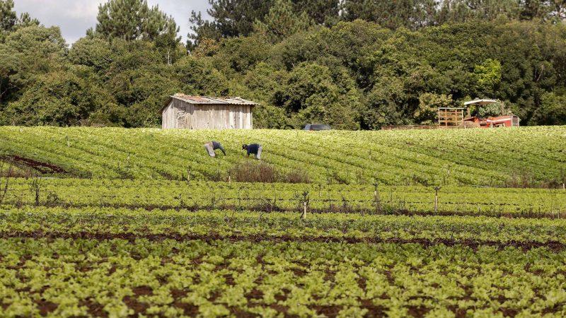 Governo do Paraná publica edital de R$ 31,5 milhões para projetos da agricultura familiar