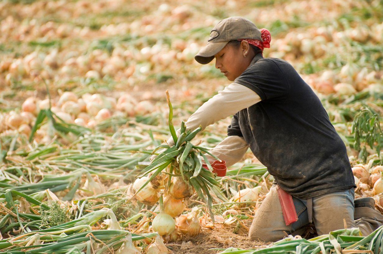 Preço da cebola diminui 39,30% e cesta básica chega a R$666, aponta pesquisa da UEPG