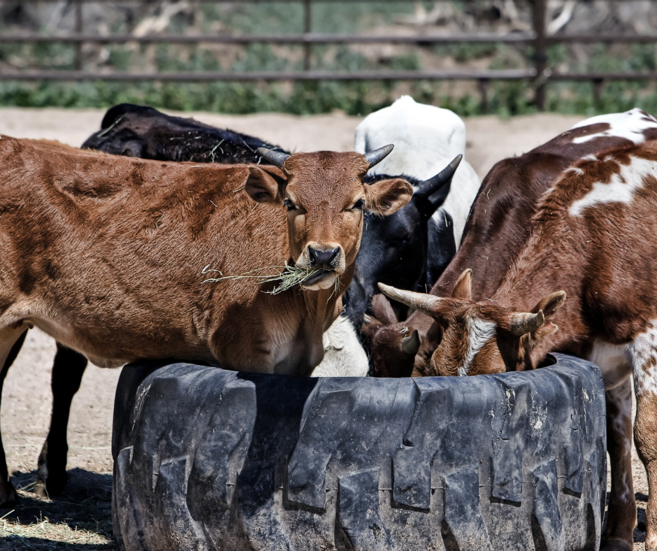 Castro terá programa de apoio a pequenos produtores na atividade de bovinocultura de corte e leite