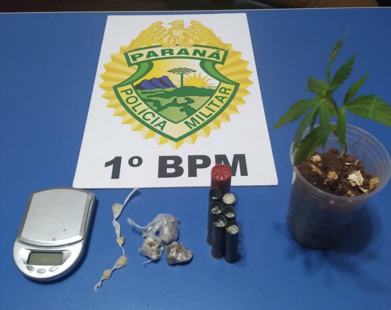 Rapaz é preso por cultivar pé de maconha em Piraí do Sul
