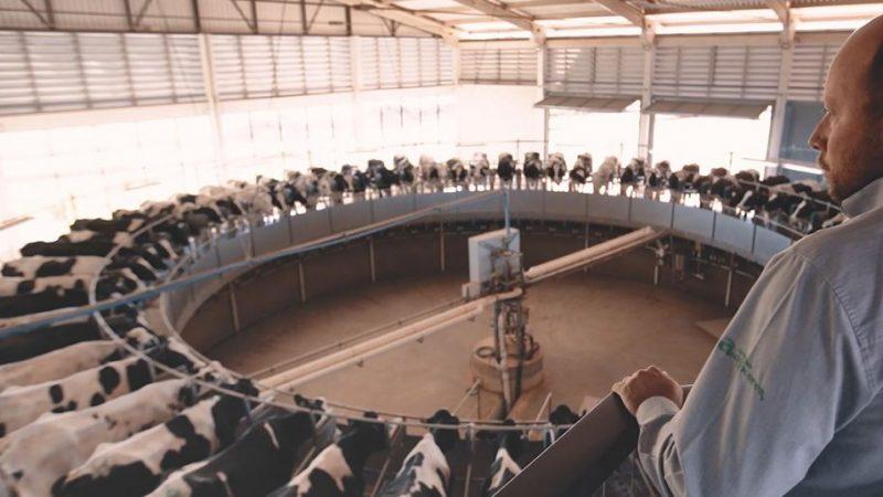 Castrolanda destaca benefícios para a cadeia leiteira