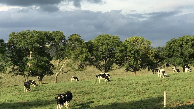 Colônia de Witmarsum começa a produzir seu primeiro leite tipo A