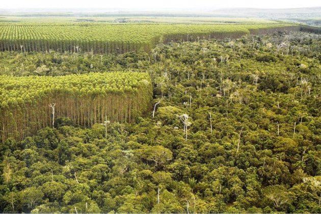 STJ garante predomínio dos dispositivos do Código Florestal no Paraná