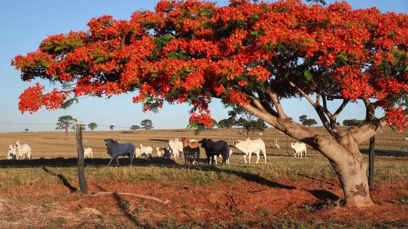Evento online debate oportunidades para o agronegócio do Paraná após certificações internacionais