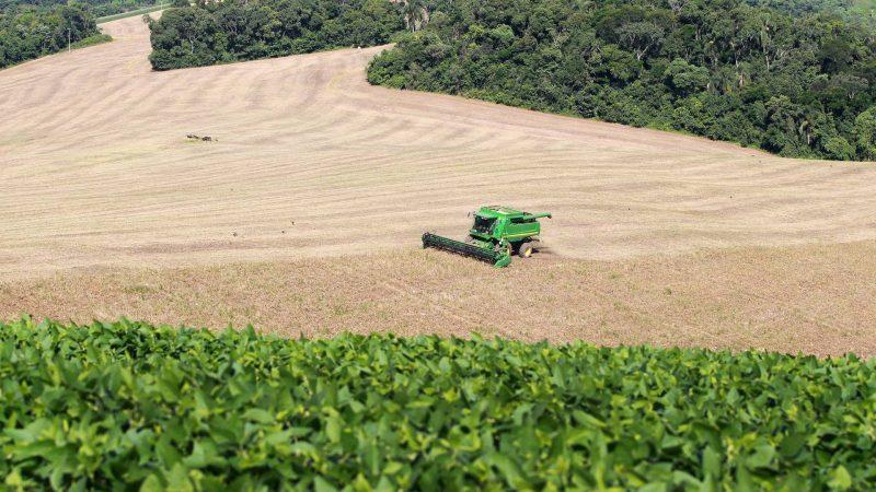 Colheita do feijão chega a 82%, aponta boletim agropecuário