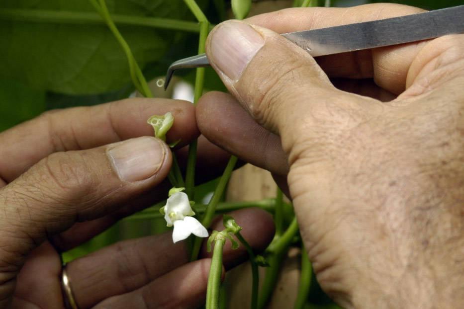 Investimento de R$ 1,2 milhão amplia cuidados sobre recursos genéticos do IDR-Paraná