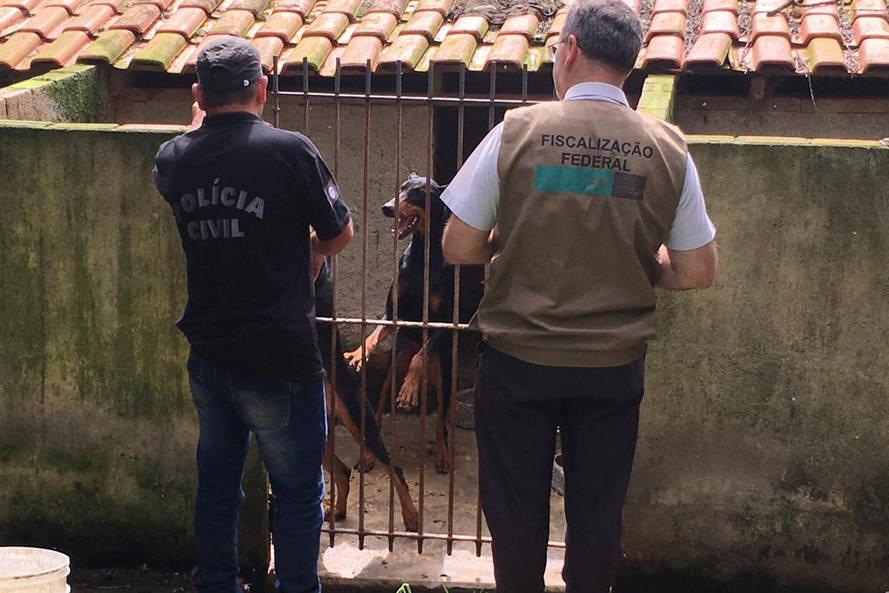 Paraná registra aumento de denúncias de maus-tratos contra animais domésticos em 2021