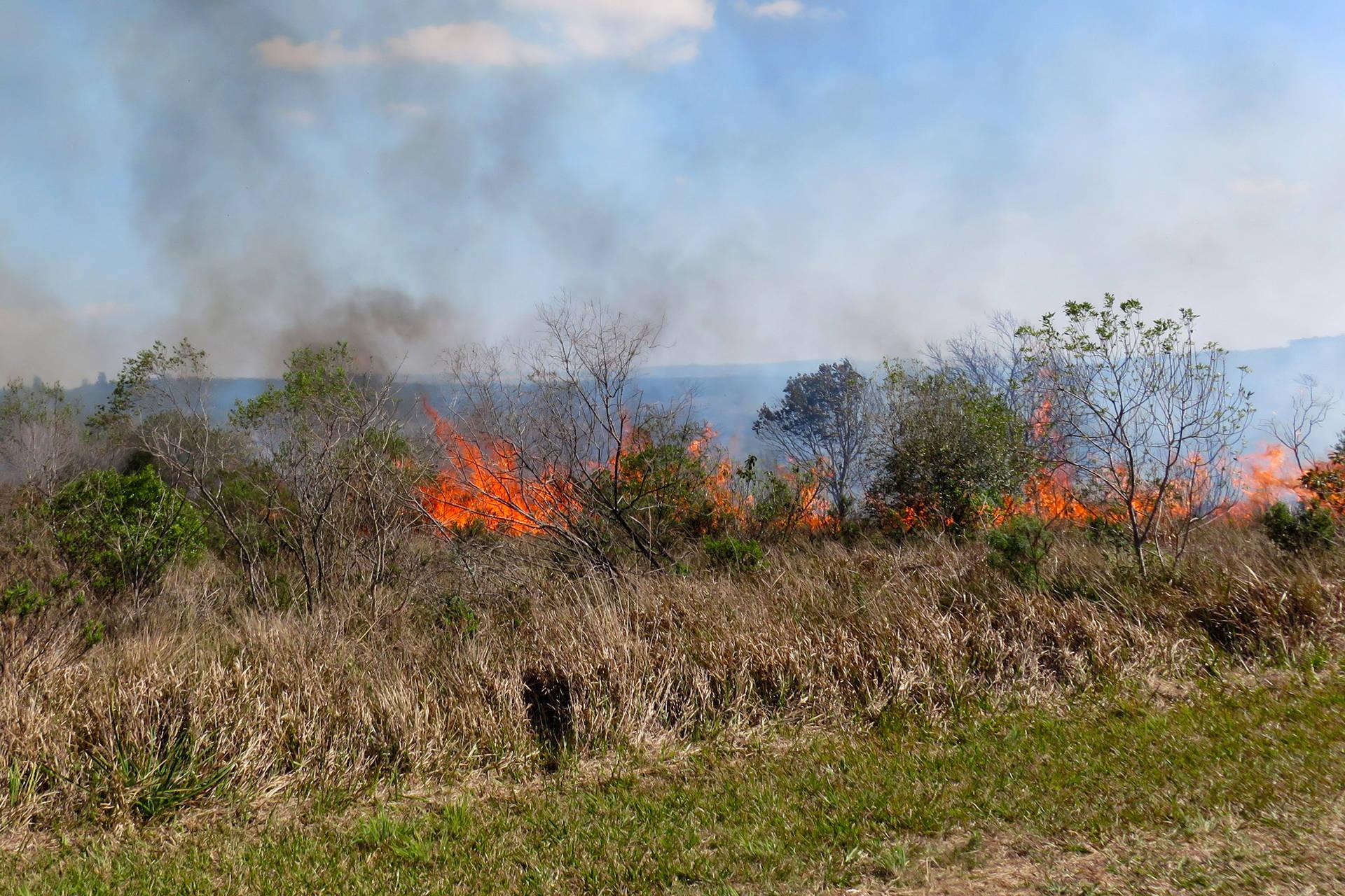 Parque Vila Velha vai realizar queima controlada contra espécies invasoras nesta semana
