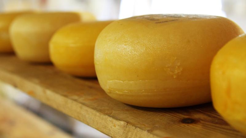 Capal, Castrolanda e Frísia preparam investimentos de mais de R$ 379 milhões para construção de uma queijaria