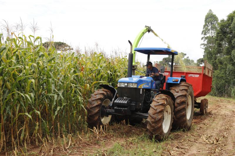 Tibagi atinge R$ 1,26 bilhão em valor bruto de produção agropecuária