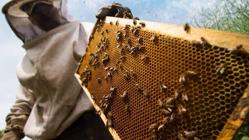 Curso gratuito de apicultura básica para produtores será realizada em Carambeí