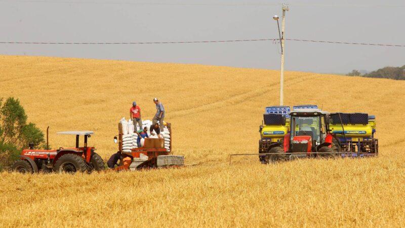 Produtores de milho começam plantio da 1ª safra com projeção de colher 4,1 milhões de toneladas