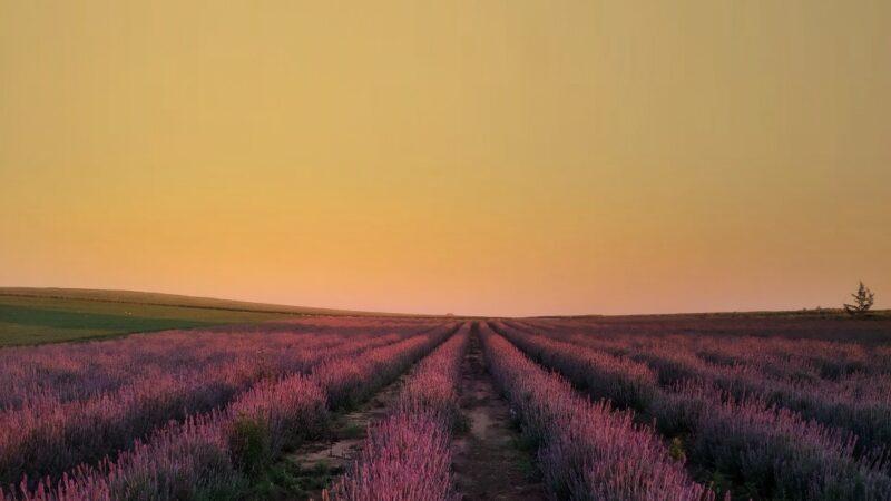 Produtores esperam aumento de vendas de flores com retorno dos eventos presenciais