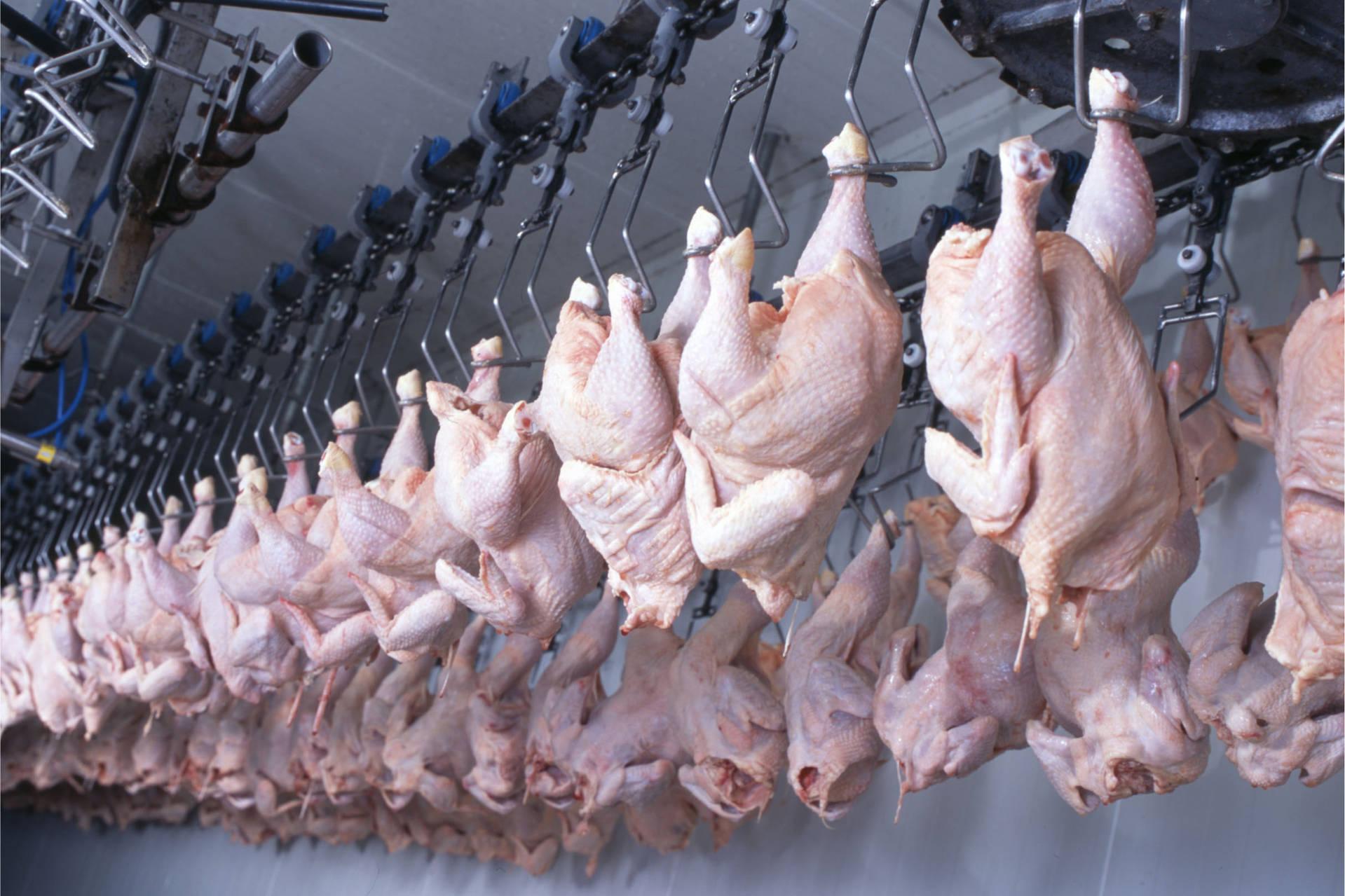 Qualidade e rigor sanitário fazem do Paraná líder em exportação de carne halal