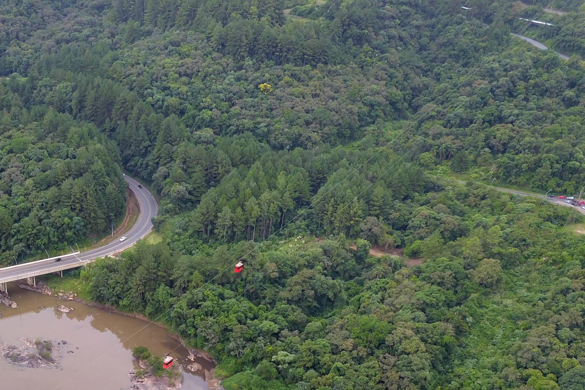 Paraná é o segundo maior produtor florestal do País, segundo IBGE