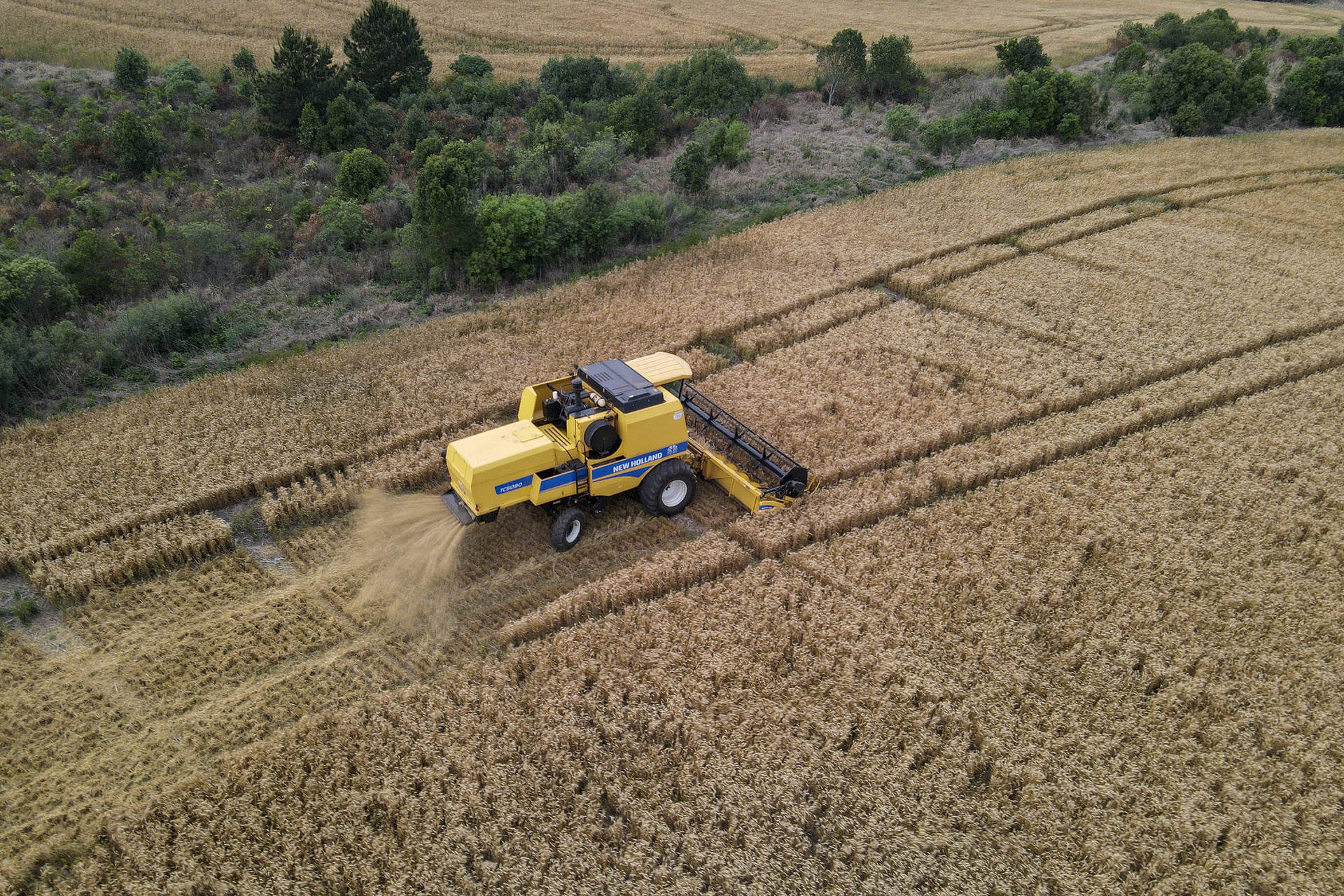 Clima, altitude e terra fértil ajudam Tibagi a se consolidar como capital nacional do trigo